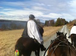 With the horse in St. Olaf track. Bräcke - Östersund